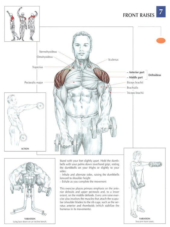 How to Do the Front Raise with Dumbbells  Verywell